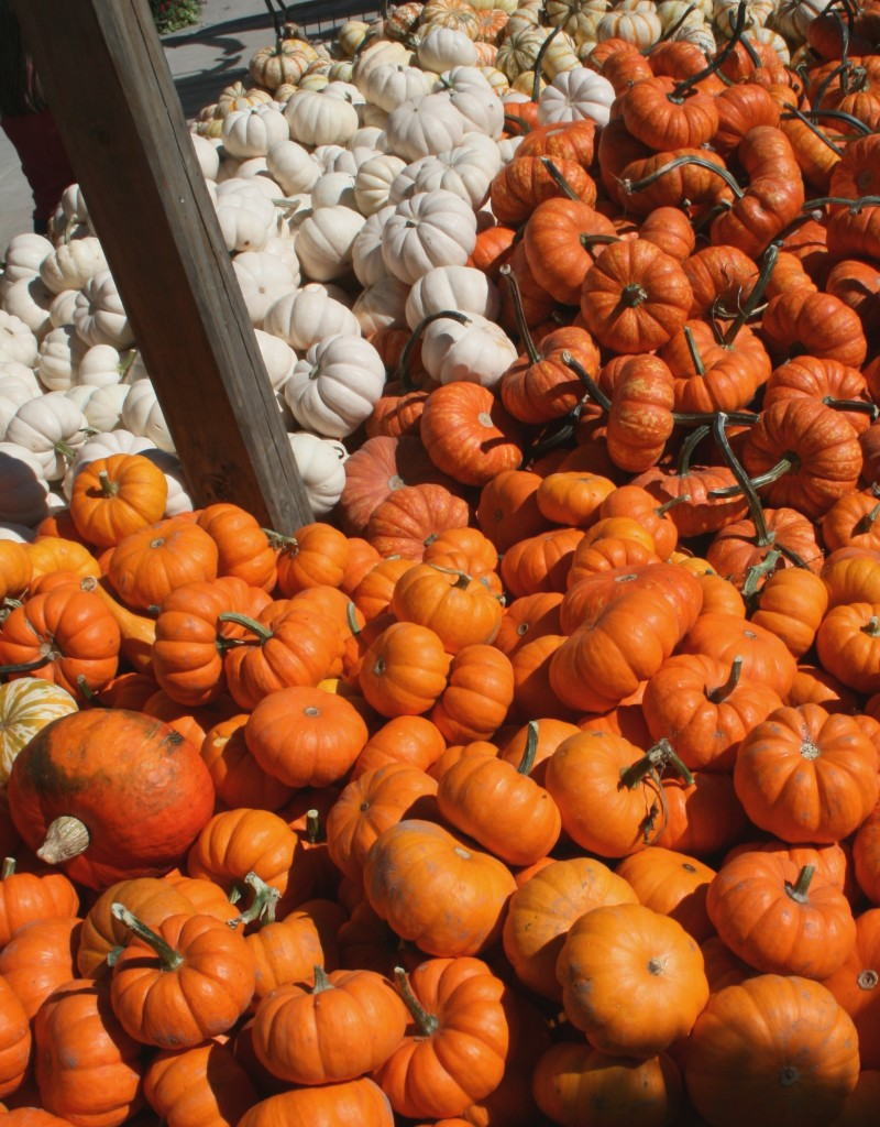 fall favorites pumpkin bread pumpkin farm thanksgiving